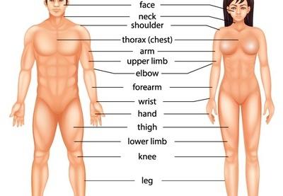 子宫卵巢位置图 图解