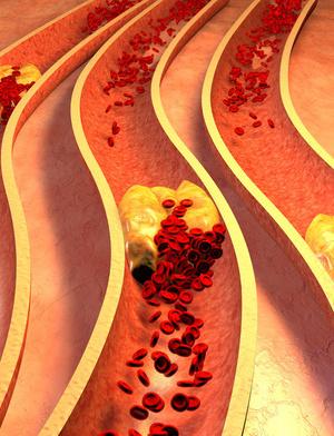 胆道,十二指肠和胰腺(前面观)