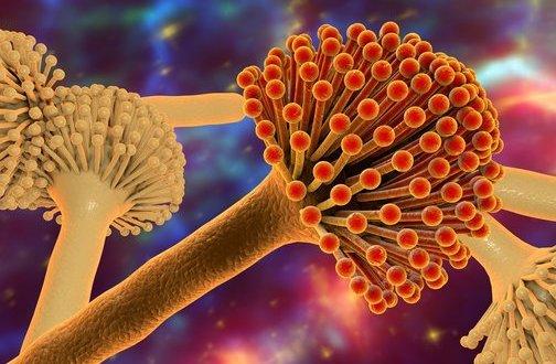单纯疱疹病毒感染