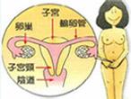 阴道壁生理图谱